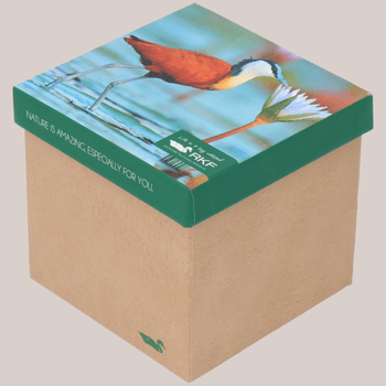 Pack 3 Calcetines Bambú Mujer Bird